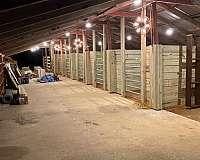 barrel-racing-horse-equine-service