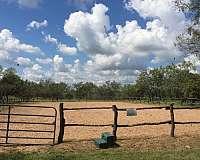 trail-pleasure-equine-equine-service-businesses