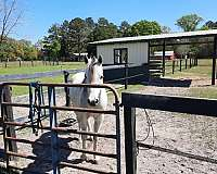 horse-equine-service-businesses-in-rincon-ga
