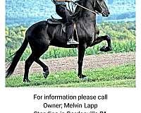 horse-breeders-in-gap-pa