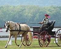 training-horse-equine-service