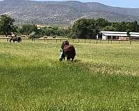trail-horse-equine-service