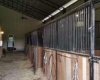horse-equine-service-businesses-in-cope-sc