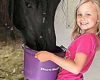 two-year-old-friesian-horse