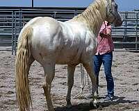 loves-to-go-quarter-horse