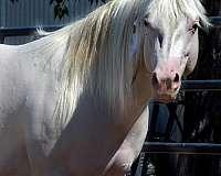 velvet-quarter-horse