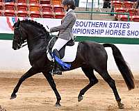 versatility-ranch-morgan-horse