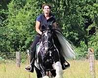 ranch-sorting-gypsy-vanner-horse