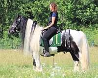 jumper-gypsy-vanner-horse