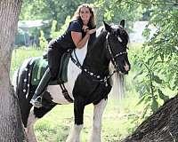 hunter-gypsy-vanner-horse