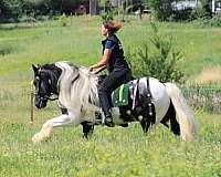 heel-gypsy-vanner-horse