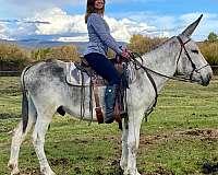 equitation-donkey