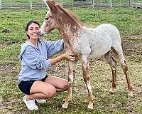 tame-donkey