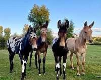 one-owner-donkey