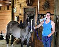 breeding-missouri-fox-trotter-horse
