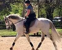 tame-thoroughbred-horse