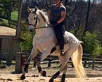 stallion-prospect-thoroughbred-horse