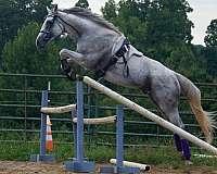 sound-thoroughbred-horse
