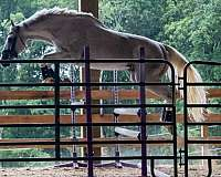 show-thoroughbred-horse