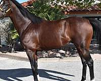 llc-thoroughbred-horse