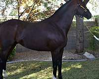 dams-sire-thoroughbred-horse