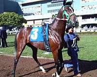 freedom-thoroughbred-horse