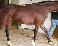 sires-thoroughbred-horse