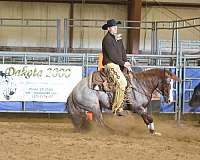strawberry-roan-horse