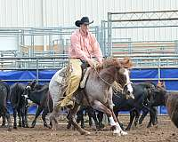 performance-horse-quarter
