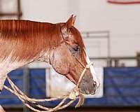 register-of-merit-horse