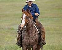 black-roan-horse
