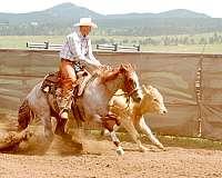 smart-little-lena-bred-horse