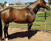 horseclicks-horse