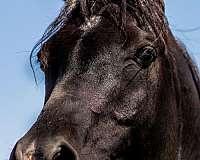 rtfore-leg-horse