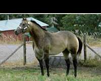 wp-quarter-horse