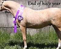 palomino-3-socks-a-blaze-horse