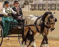 performance-horse-stallion