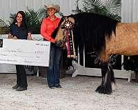 buckskin-driving-horse
