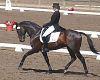 show-winner-thoroughbred-horse