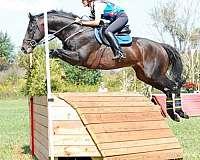 english-horse