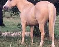 steer-wrestling-horse