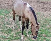 team-sorting-paint-horse