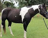 black-heel-horse