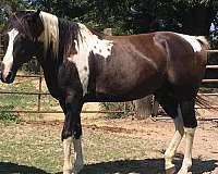 black-penning-horse