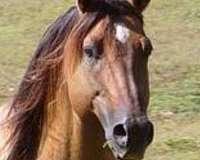 bay-dun-horse
