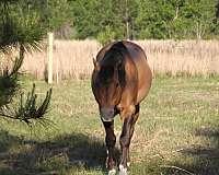 dun-w-blk-points-bay-horse