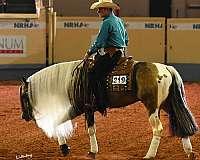 tri-color-stallion