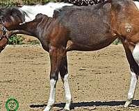15-hand-paint-stallion