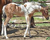 15-hand-paint-horse