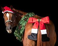 rodeo-quarter-horse